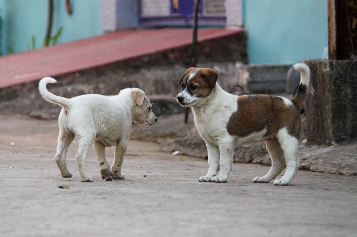 Cans na rúa