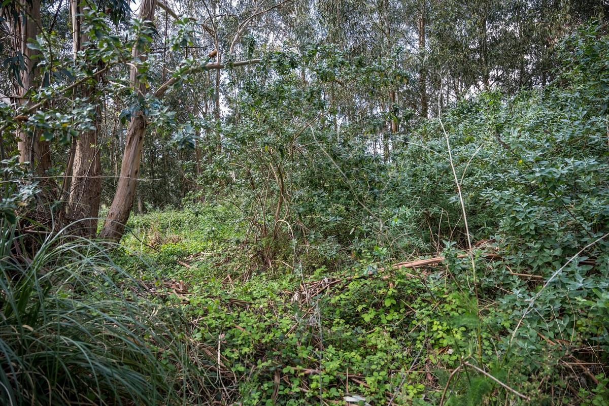 Bosque de Breogán